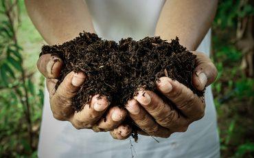 Le compost est le résultat de la dégradation de la matière organique